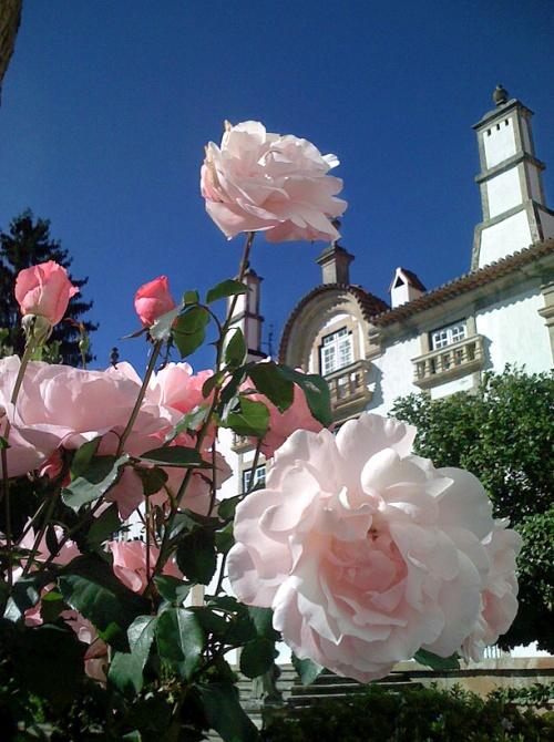 rosesatmateus.jpg